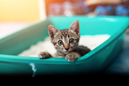 Avoid Doing This with Kitty Litter | Billy the Sunshine Plumber