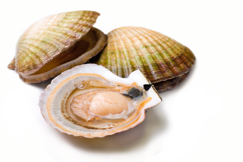 It's Bay Scallop Season, Watch for Shells | Billy the Sunshine Plumber